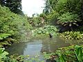 Filming Da Vinci's Demons - Jungle - The Lost Gardens of Heligan (9757746506).jpg