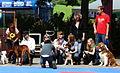 Finalisten der schoenste hund Bavaria Dog 2011.JPG