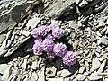 Fleur inconnue - panoramio (3).jpg