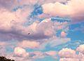 Flickr - Duncan~ - Cloudscape.jpg