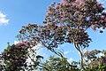 Flora do Parque Nacional Serra da Capivara (0546).jpg