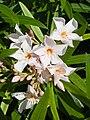 Flores - Quintana Roo - México-2.jpg