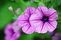 Flower!!! (10553592496).jpg