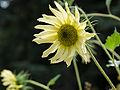 Flower (14870752815).jpg