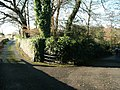 Flowering Mahonia - geograph.org.uk - 1575850.jpg