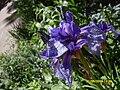 Flowers 31.jpg