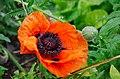 Flowers Sommerausflug der deutschen Samstagschule in Edinburgh, 2012 (7434836346).jpg