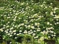 Flowers at Colva Residency Beach Resort - panoramio.jpg