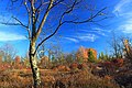 Foliage Walk (4) (30264055891).jpg