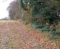 Footpath to Blagdon Copse - geograph.org.uk - 1069527.jpg