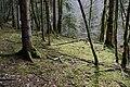 Forêt @ Alex (51098095688).jpg