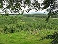 Forest, Drumwhirn - geograph.org.uk - 464409.jpg