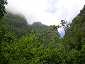 Cloud forest - Temperate cloud forest on La Palma, Canary Islands