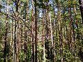 Forest White.jpg