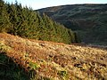 Forest edge in valley - geograph.org.uk - 294738.jpg