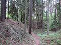 Forest in Juodkrantė.jpg