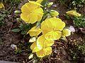 Fower in garden.jpg