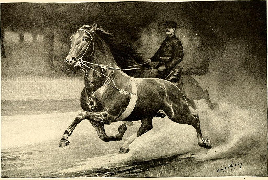 Картинки по запросу World Arabian Horse Organisation