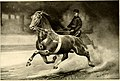 French coach horses at Sedgeley Farm - owned and bred by E.M. Barton (1900) (14593555950).jpg