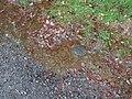 Frog spawn at Lochchaussee 01.jpg