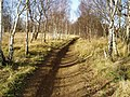 Fryston Wood - geograph.org.uk - 11135.jpg