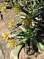 Gardenology.org-IMG 2685 hunt0903.jpg