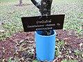 Gardenology.org-IMG 7132 qsbg11mar.jpg