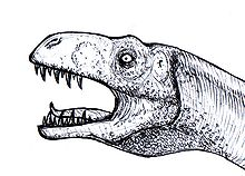 Gasosaurus drawing.jpg