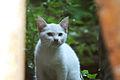 Gato (4782041914).jpg