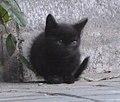 Gato callejero en Madrid 10b.jpg