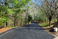 Gfp-st-louis-driveway-into-the-woods.jpg