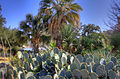 Gfp-texas-san-antonio-cacti-and-trees.jpg