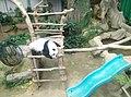 Giant Panda Conservation Centre in Zoo Negara Malaysia 2021 (6).jpg