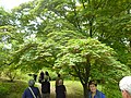 Giardino di Ninfa 129.jpg