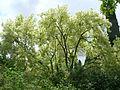 Giardino di Ninfa 20.jpg