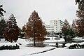 Gifu-u snow.jpg