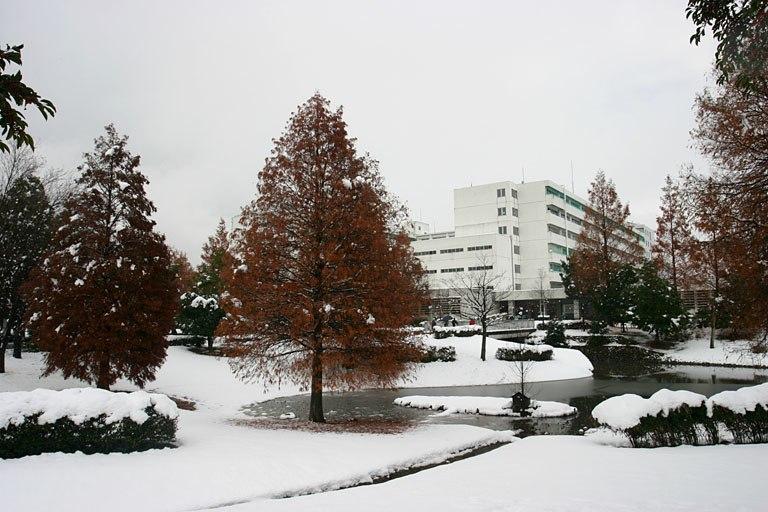 Gifu-u snow