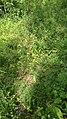 Gilova bosko 03-07-2020 (01) 03.jpg