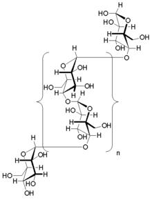 Glycogen Structure Diagram | www.pixshark.com - Images ...
