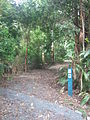 Gold Coast Hinterland Great Walk 1 Stevage.jpg