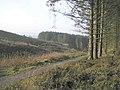 Gortin Glens Forest Park - geograph.org.uk - 116806.jpg