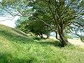 Grassy bridleway below Tolsford Hill - geograph.org.uk - 137039.jpg