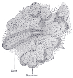 Image Result For Anatomy Of The