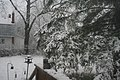 Gray Squirrel in the Snow 3947 (5223913055).jpg