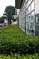 Green, green grass of home (8161153288).jpg