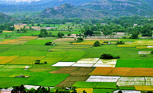Agriculture in India - Farms in rural India. Most farms in India are small plots such as in this image.