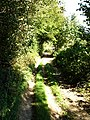 Green lane beside Longbeech Wood - geograph.org.uk - 245451.jpg