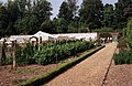 Greenhouse in the Victorian Kitchen Garden - geograph.org.uk - 587995.jpg