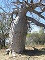 Gregory Tree.JPG