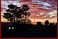 Grenfell Sunrise from Cowra Road-12and (3977338877).jpg